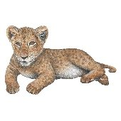 Lion Cub Peel and Stick Wall Sticker