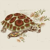 Desert Tortoise Wall Canvas Art